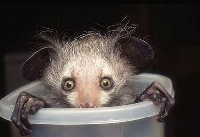 Animals Grey Fur Adorable Shades Embarrassed Cutest