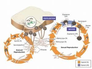 Amy B U0026 39 S Bio 20 Blog  Fungi