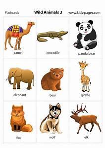 Wild Animals 3 flashcard