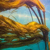Live Bottom Reefs