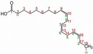 Acide Gras D U00e9saturase  U2014 Wikip U00e9dia