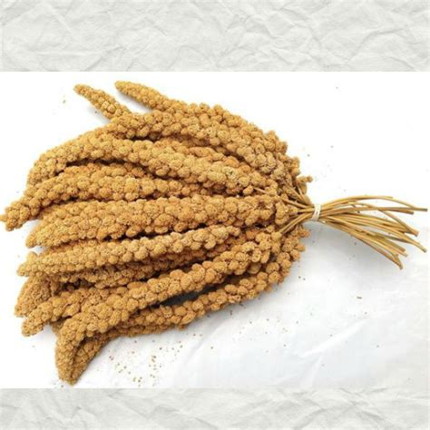 higgins naturally grown spray millet for birds 5 lb 2 267