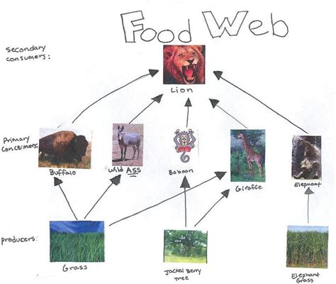 cuisine web grassland ecosystem food chain imgkid com the