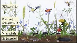 Welche Blume Steht Für Leben : die wiese ~ Whattoseeinmadrid.com Haus und Dekorationen