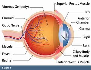 Retina Specialists In Montgomery