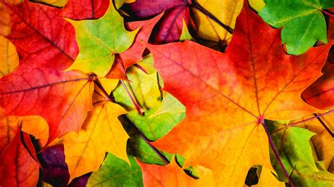 Colourful Autumn Wallpaper by Wallpaper Leaves 5k 4k Wallpaper 8k Colorful Autumn
