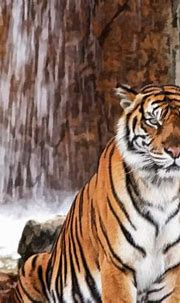 Beautiful Tiger posed in front of a waterfall.   Tigers ...