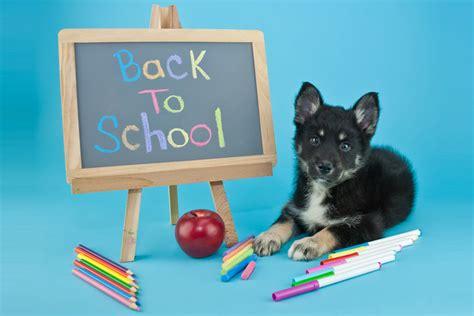 grunderziehung dogworkz hundeschule berlin