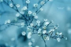 Blumen Im Winter : hintergrundbilder sonnenlicht blumen natur winter ast blau frost kirschbl te bl hen ~ Eleganceandgraceweddings.com Haus und Dekorationen