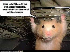 Funny Hamsters and Guinea Pigs - YouTube