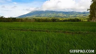 Rice Volcano Paddies Canlaon Animated
