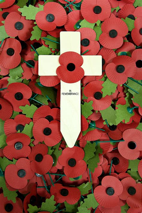 remberance poppy how to wear a remembrance day poppy uk 12 steps