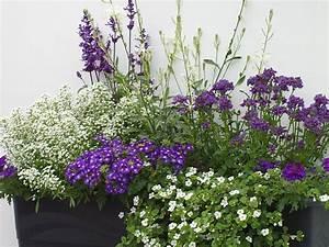 Welche Pflanzen Für Balkon : ideen f r ihre balkonbepflanzung in blau und wei ~ Michelbontemps.com Haus und Dekorationen