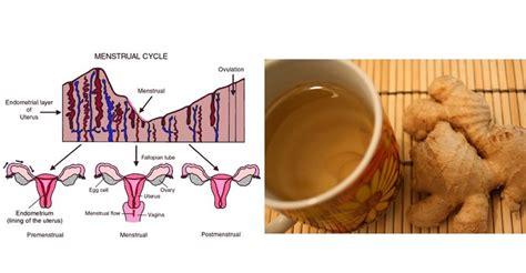 hip ache  menstrual cycle  hip flexor