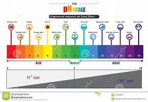 Body Ph Balance Chart The Ph Scale Universal Indicator Ph Color Chart Diagram