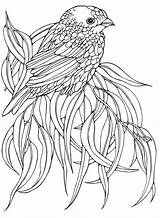 Bird Coloring Birds Pages Patterns Adult Embroidery Adults Printable Colouring Designs Drawing Books Ru Gwd Animals Ruth Heller Sheets Pattern sketch template