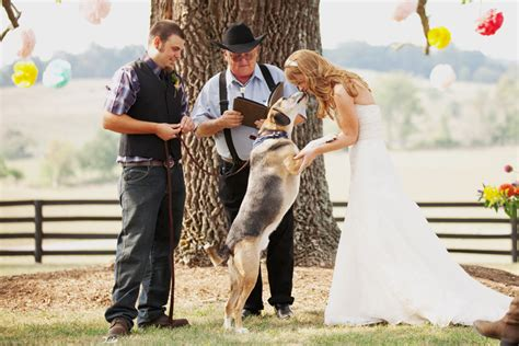 definitive guide  including  dog   wedding