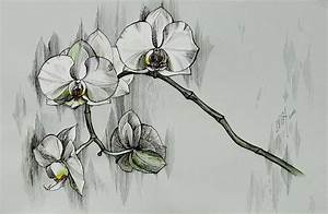 Silver Morning Orchids Drawing by Inga Vereshchagina
