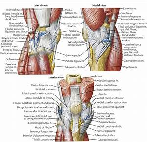 Knee Ligament Diagrams to Print | Diagram Site