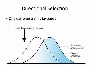 Disruptive Selection Evolution Terms And Definitions Chemistry 110 With Brent