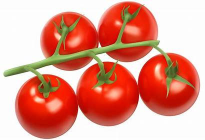 Tomatoes Clipart Vegetables Branch Bunch Clip Cherry