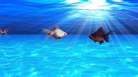 Fish Background Fish Aquarium Background