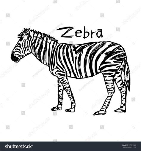 Zebra Vector Illustration Sketch Hand Drawn Stock Vector