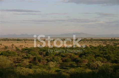 Morning Sun In The African Savannah Serengeti Tanzania