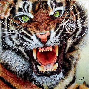 Desktop HD Wallpapers Free Downloads: Angry Tiger HD ...
