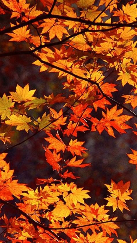 Autumn Wallpapers For Phone Hd by Autumn Wallpaper Cell Phone Wallpaper Iphone