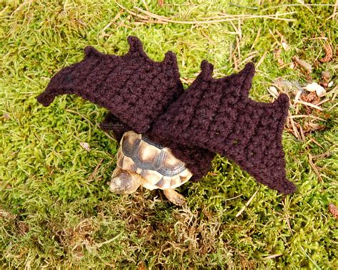 artist knits adorable crocheted sweaters  tortoises
