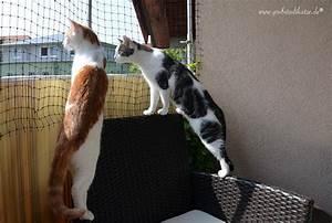 Katzen Balkon Sichern Ohne Netz : balkon katzennetz ohne bohren katzennetz am balkon anbringen ~ Frokenaadalensverden.com Haus und Dekorationen