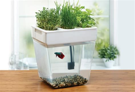 aquaponics kit aquafarm water garden aquaponics fish