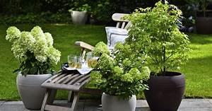 Winterharte geholze fur kubel mein schoner garten for Garten planen mit sichtschutzrollo für balkon