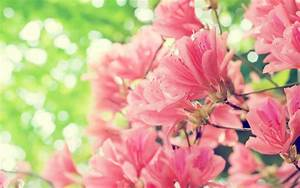 Download Beautiful Spring Flowers 14117 2560x1600 px High ...