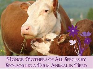 Email - Sponsor a Farm Sanctuary Animal for Mother's Day ...