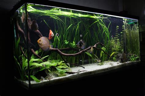 Best Substrate For Aquascaping by Low Tech 80g Planted Discus Tank The Planted Tank Forum