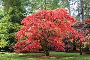 Arbuste Persistant Croissance Rapide : arbres feuillage persistant croissance rapide maison ~ Premium-room.com Idées de Décoration