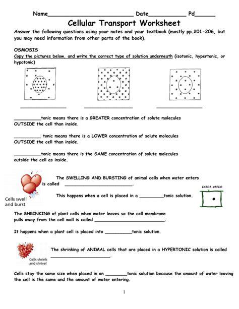 transport in cells worksheet worksheets for all