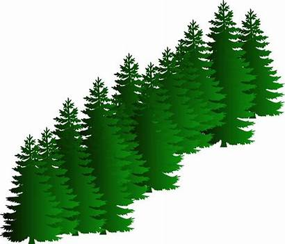 Evergreen Tree Clipart Fir Cluster Clip Pine