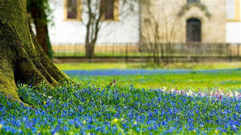 blue flowers grass macro nature wallpaper allwallpaper