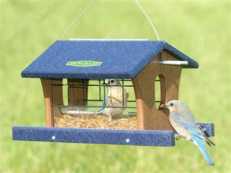 birdhouse designs for robins