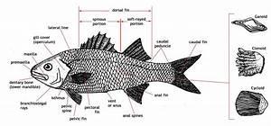 Fish Diagrams Printable
