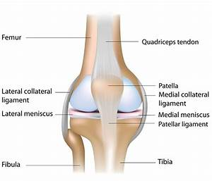Learn Yoga Anatomy: 5 Yoga Poses to Protect the Knee Joint ...