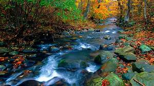 water, stream, between, green, yellow, leaves, covered, forest