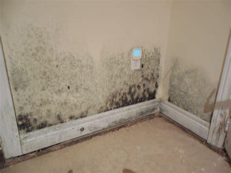 Basement Mold Prevention Strategies