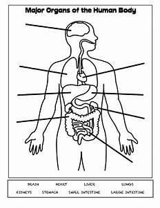Foot Major Organs Diagram