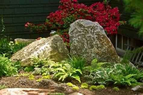 gardens beautiful  ferns  pinterest