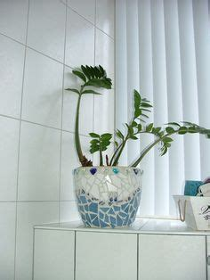 Best Pot Plant For Bathroom by Klavertje Vier на удачу Zoeken
