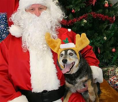 Dog Santa Christmas Pet Dogs Costume Costumes